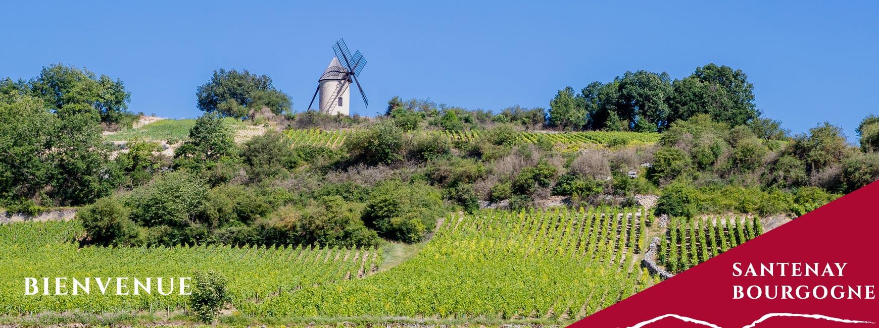 Bienvenue au domaine Mestre père et fils à Santenay en Bourgogne